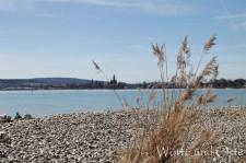 Seeufer bei Konstanz